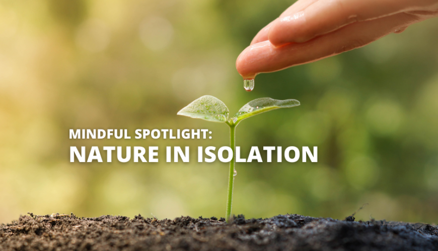 Finding Nature In An Isolated World