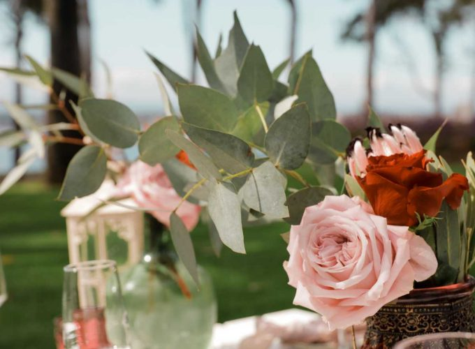Kings Park Bubbles & Botanicals | Guided Hike & High Tea