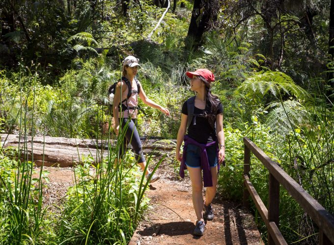 King Of The Forest | King Jarrah Guided Hike