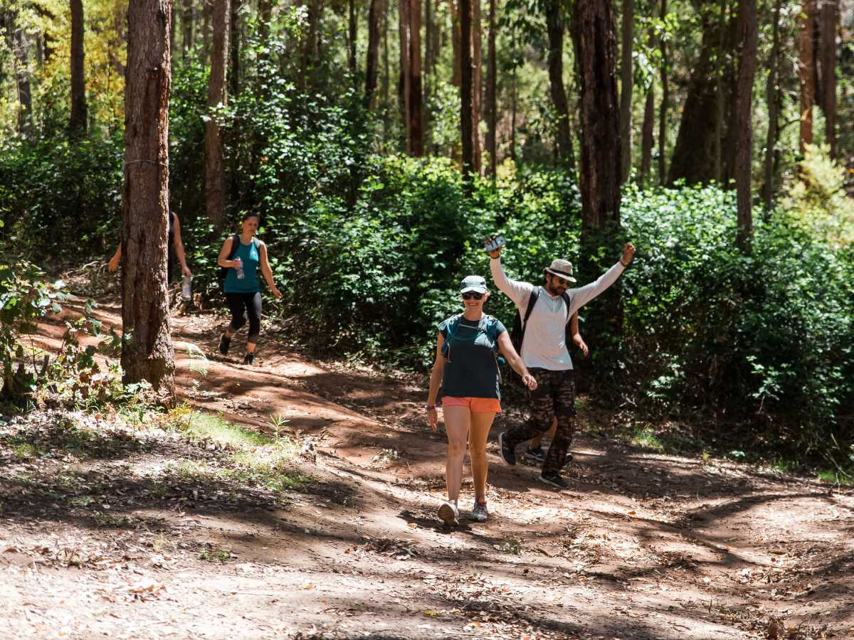 King Of The Forest   King Jarrah Guided Hike