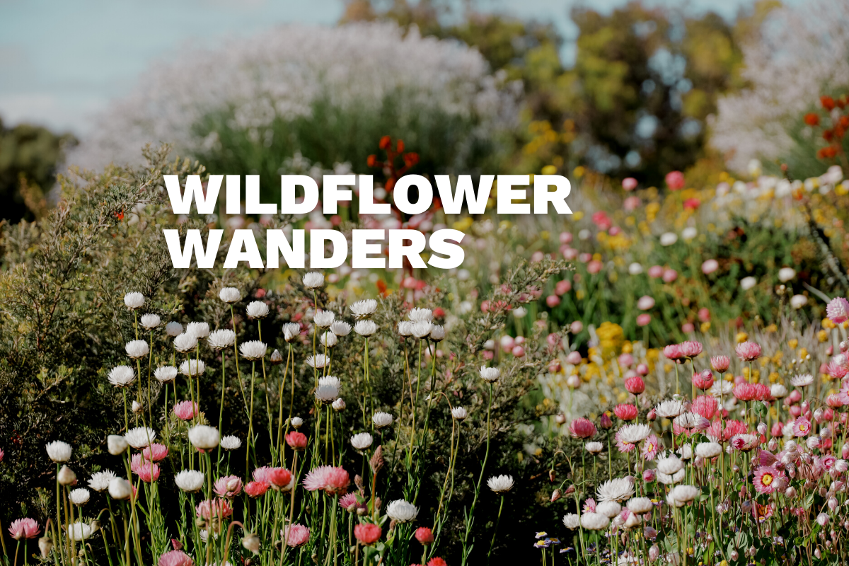 Wildflower Wanders